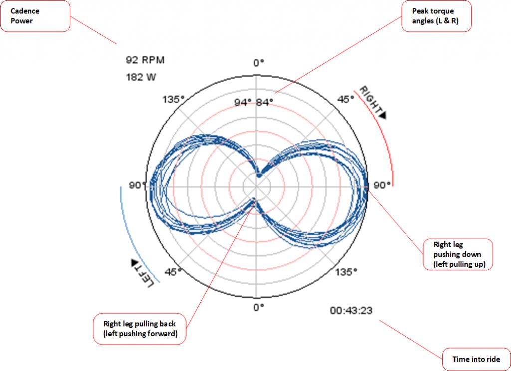 Peanut plot/polar plot showing crank torque versus angle